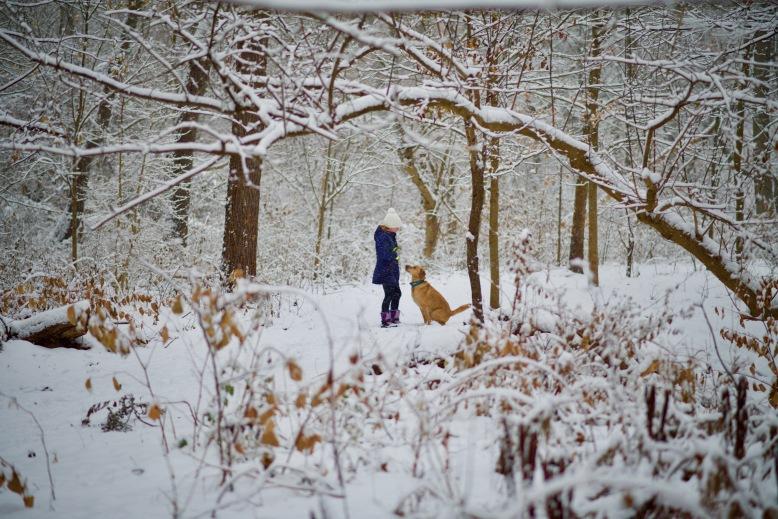 dog woods.jpg